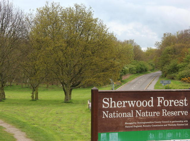 Sherwood Forest!