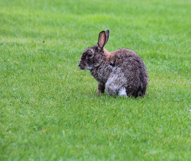 A wery, wet wabbit.