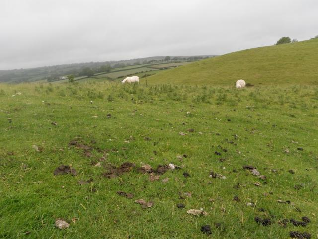 Damn sheep crap everywhere