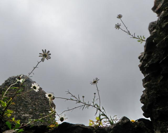 Flowers growing out of the ruins